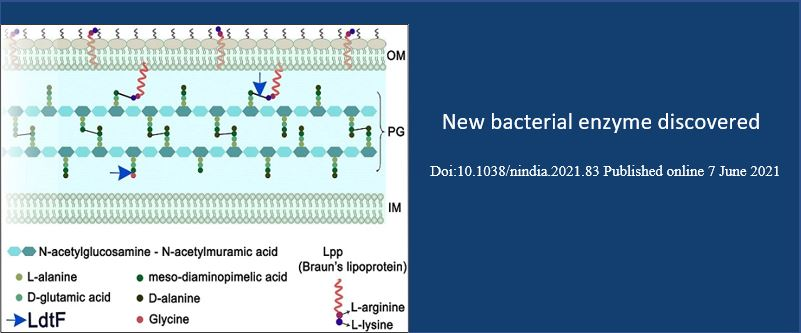 New bacterial enzyme discovered